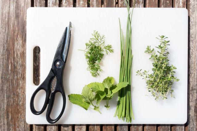 Herbes aromatiques et potassiu